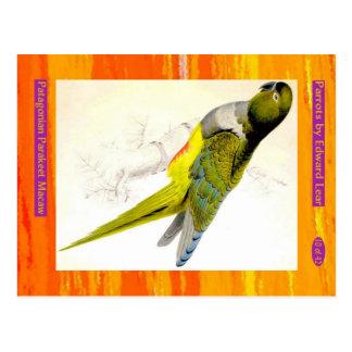 Edward Lear. Patagonian Parakeet Macaw. Postcard