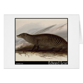 Edward Lear s Banded Mongoose Greeting Card