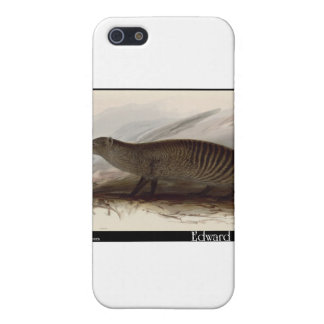 Edward Lear s Banded Mongoose Cover For iPhone 5