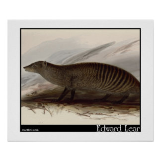 Edward Lear s Banded Mongoose Print
