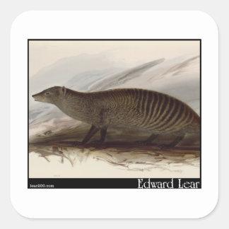 Edward Lear s Banded Mongoose Sticker