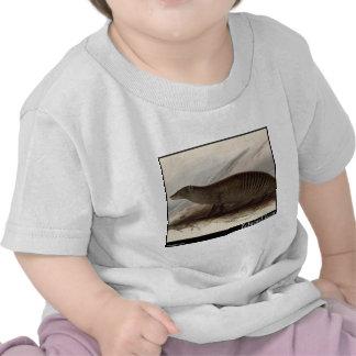 Edward Lear s Banded Mongoose Tee Shirt