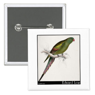 Edward Lear s Blossom-Feathered Parakeet Pinback Buttons