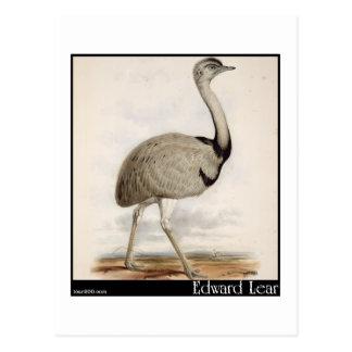 Edward Lear s Emu Post Cards