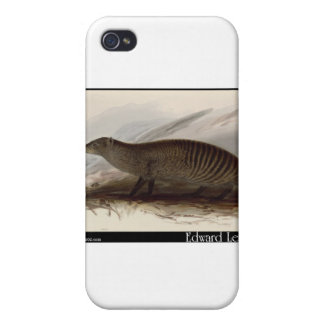 Edward Lear's Banded Mongoose Covers For iPhone 4