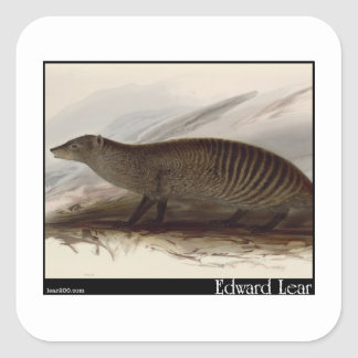 Edward Lear's Banded Mongoose Square Sticker