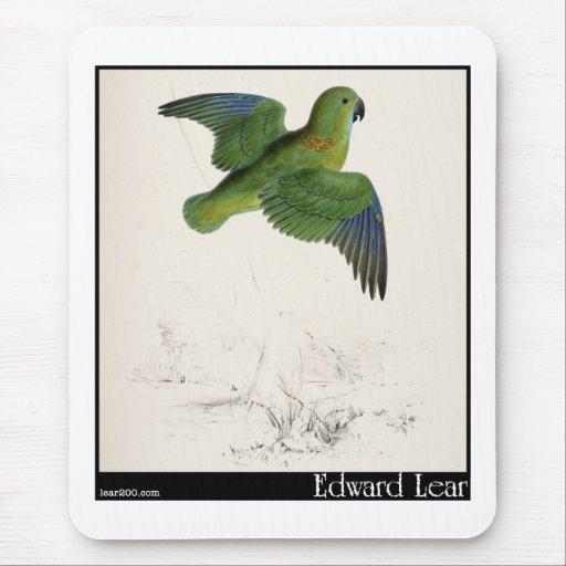 Edward Lear's Collared Parakeet in flight Mousepads