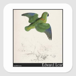 Edward Lear's Collared Parakeet in flight Square Sticker