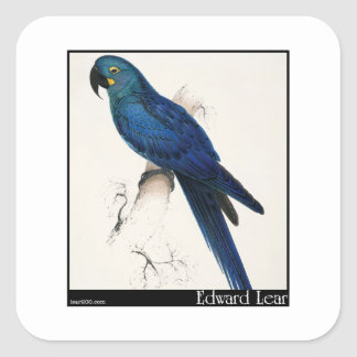 Edward Lear's Hyacinth Macaw Square Sticker