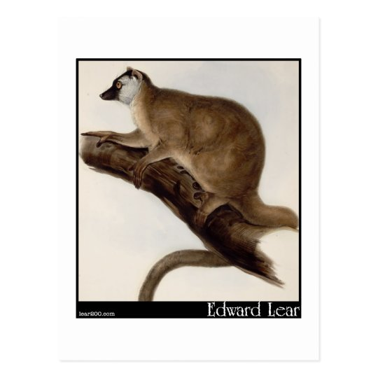 Edward Lear's Red Macauco (Red Lemur) Postcard
