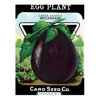Eggplant Seed Packet Postcard