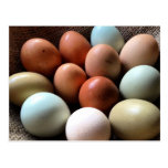 Eggs of all Shades