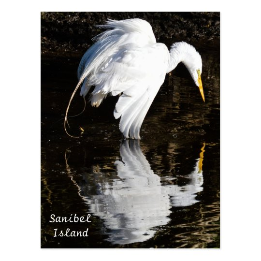 Egret in Bloom Postcard