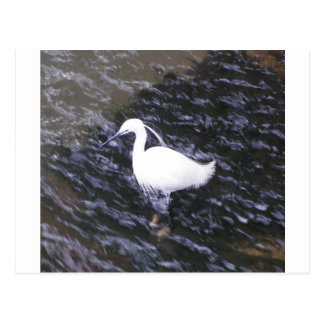 Egret in fast flowing river postcard