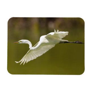 egret in flight vinyl magnets