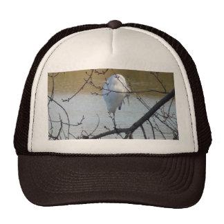 Egret in Tree Trucker Hat