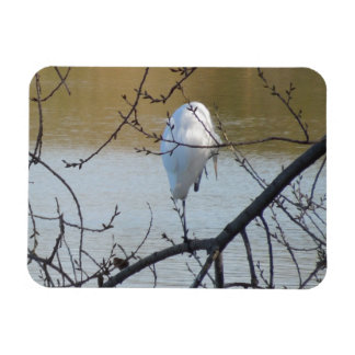 Egret in Tree Magnets
