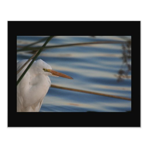 Egret on Satin Print
