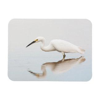 Egret on still pond rectangular photo magnet