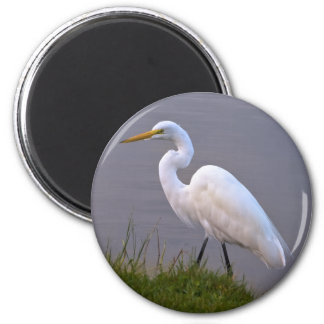 Egret Strolling in the Sunlight Magnet