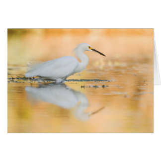 Egret when the sun is setting card