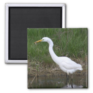 Egret with fish square magnet