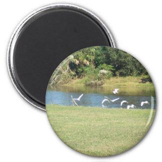 Egrets in Flight Fridge Magnets