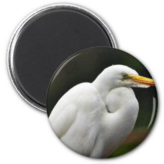 Egrets Fridge Magnets
