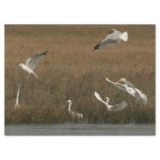 Egrets Seagulls Birds Wildlife WetlandTissue Paper