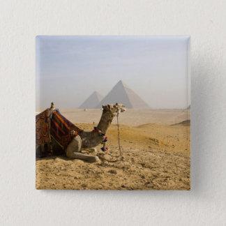 Egypt, Cairo. A lone camel gazes across the 15 Cm Square Badge