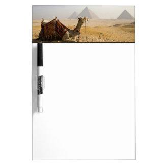 Egypt, Cairo. A lone camel gazes across the Dry Erase Board