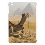 Egypt, Cairo. A lone camel gazes across the iPad Mini Cover