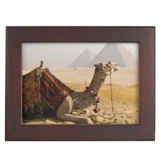Egypt, Cairo. A lone camel gazes across the Keepsake Box