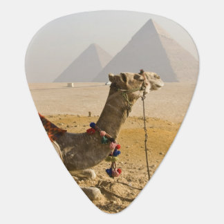 Egypt, Cairo. A lone camel gazes across the Plectrum