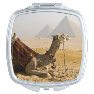 Egypt, Cairo. A lone camel gazes across the Vanity Mirrors