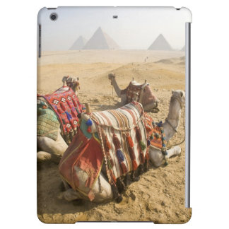 Egypt, Cairo. Resting camels gaze across the