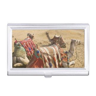 Egypt, Cairo. Resting camels gaze across the 2 Business Card Holder