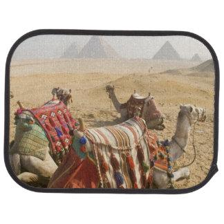 Egypt, Cairo. Resting camels gaze across the 2 Car Mat