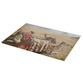 Egypt, Cairo. Resting camels gaze across the 2 Cutting Board