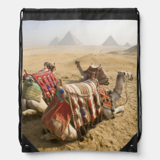 Egypt, Cairo. Resting camels gaze across the 2 Drawstring Bag