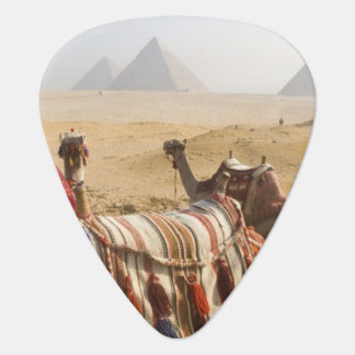 Egypt, Cairo. Resting camels gaze across the 2 Guitar Pick