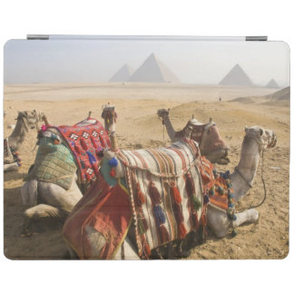 Egypt, Cairo. Resting camels gaze across the 2 iPad Cover