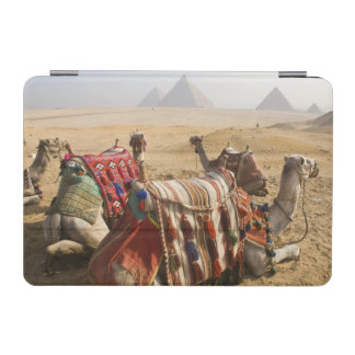 Egypt, Cairo. Resting camels gaze across the 2 iPad Mini Cover