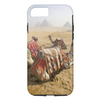 Egypt, Cairo. Resting camels gaze across the 2 iPhone 8/7 Case