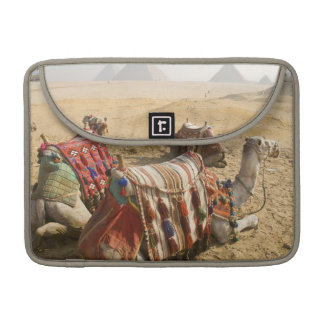 Egypt, Cairo. Resting camels gaze across the 2 Sleeve For MacBook Pro