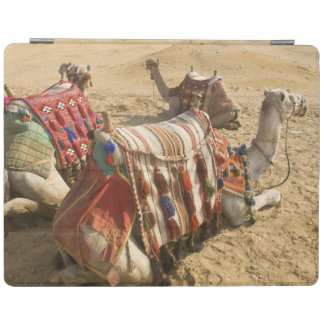 Egypt, Cairo. Resting camels gaze across the iPad Cover