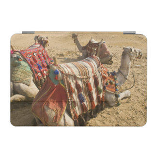 Egypt, Cairo. Resting camels gaze across the iPad Mini Cover