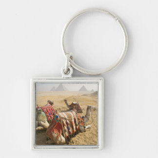 Egypt, Cairo. Resting camels gaze across the Key Ring