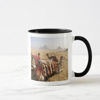 Egypt, Cairo. Resting camels gaze across the Mug