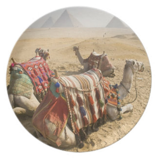 Egypt, Cairo. Resting camels gaze across the Plate
